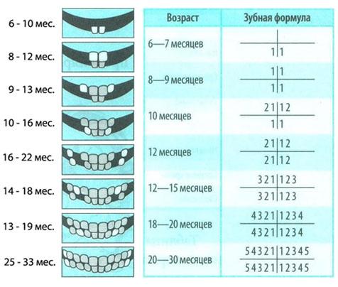 на зубы сколько дней температура уверен себе боится