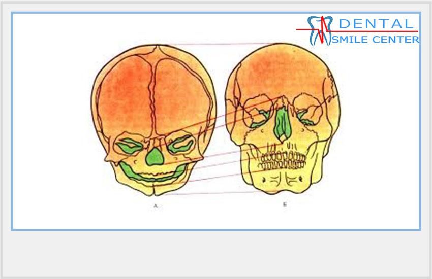 зубочелюстная система картинки